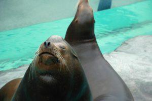 上野動物園-アザラシで癒される
