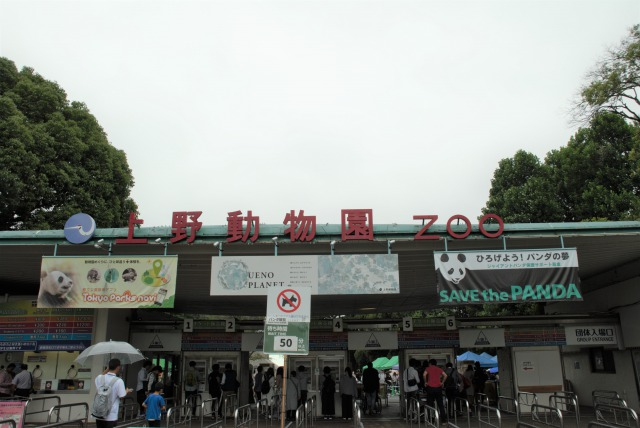 上野動物園-シャンシャン待ち時間