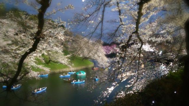千鳥ヶ淵ボートと夜桜