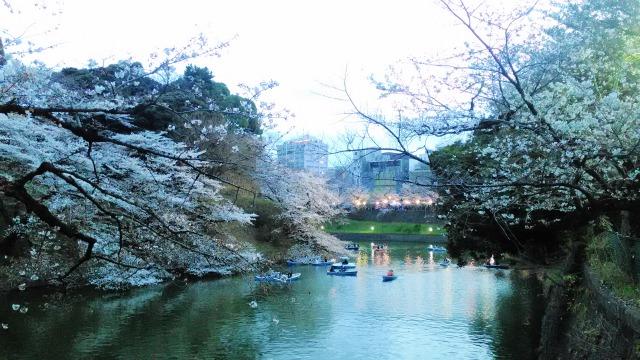 千鳥ヶ淵ボートと桜