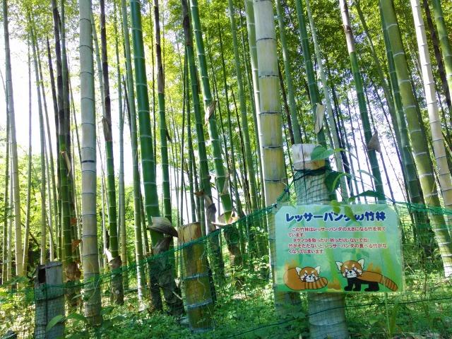 園内の竹林