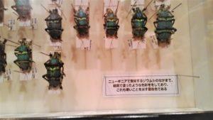 ゾウムシ標本