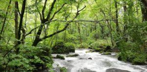 奥入瀬渓流・九段の滝付近