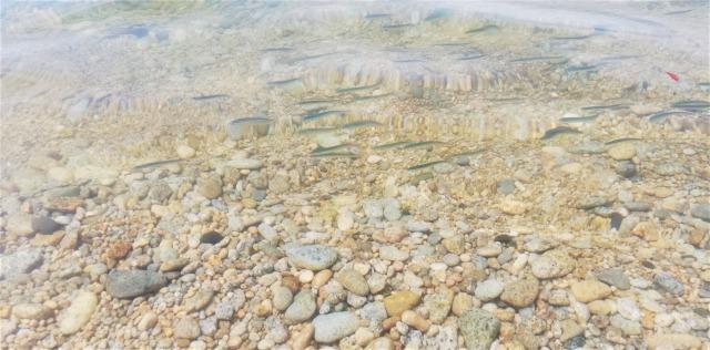 足元を泳ぐ小魚の群れ